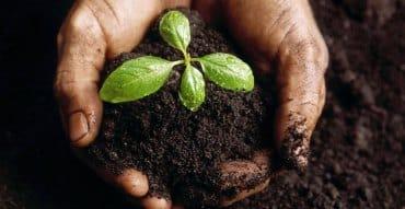 Skrb za zdravo in ekološko rast rastlin