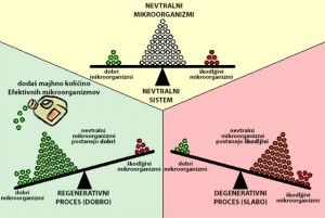 Prikaz mikrobiološkega ravnovesja v naravi